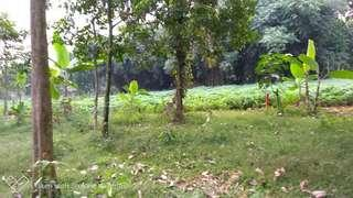 Tanah kebun luas 700m di kuripan ciseeng bogor