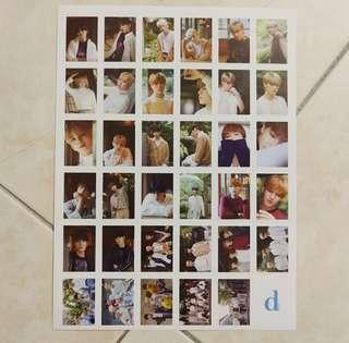 Seventeen Dicon Sticker