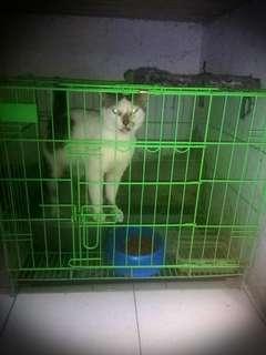 Kandang Kucing merek Sweety