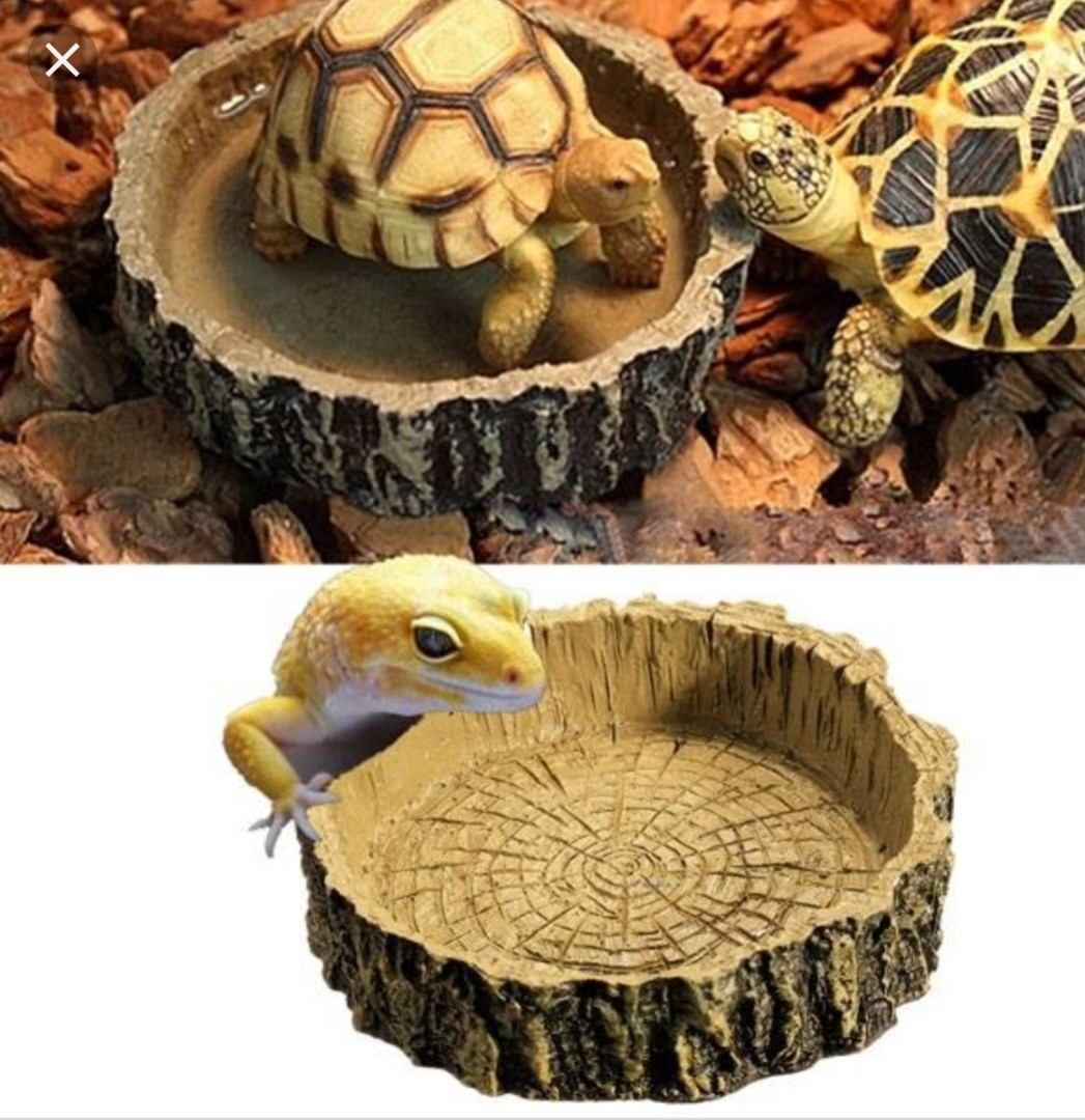 Food dish, Pet Supplies, For Small Animals, Pet Accessories