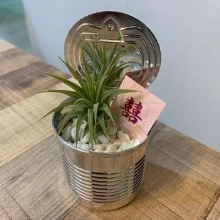 Wedding Favors Wedding door gift - Airplant Terrarium customised