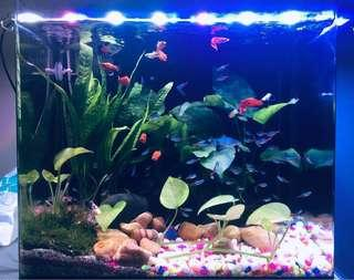 🚚 Fish Tank with full accessories (Internal filter, plug & play)