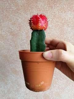 🚚 Cactus