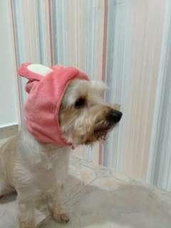 Assorted Dog Clothes - Headwear, Bikini, Shoes