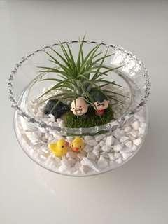 Grow old with Me Air plant terrarium