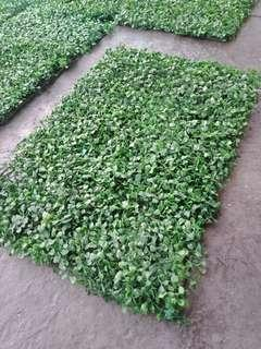 Artificial Wall Leaves (2 x 1 feet) - 9 pcs