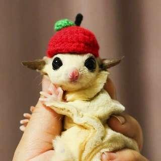 Handmade cute apple sugar glider cap