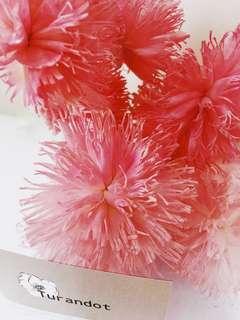 🚚 索拉花櫻花粉八公分羽毛康乃馨組