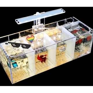 4 partition removable betta guppy fish tank with light, filtration and media set ( last 2 sets instock )