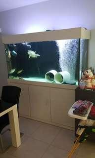 5ft white cabinet sump tank