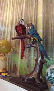 Parrot bird display
