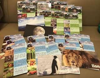 Thomas & friends learning card 學習卡animals & nature