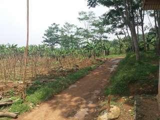 Tanah perkebuan..akses pinggir jalan jalur puncak dua sentul-Hambalang legalitas SHM