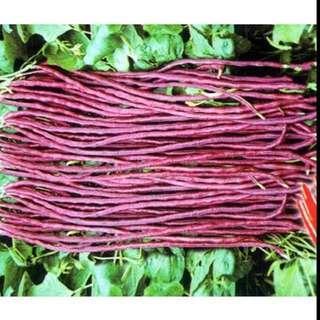 Red bean seeds