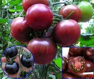 Tomato seeds mix
