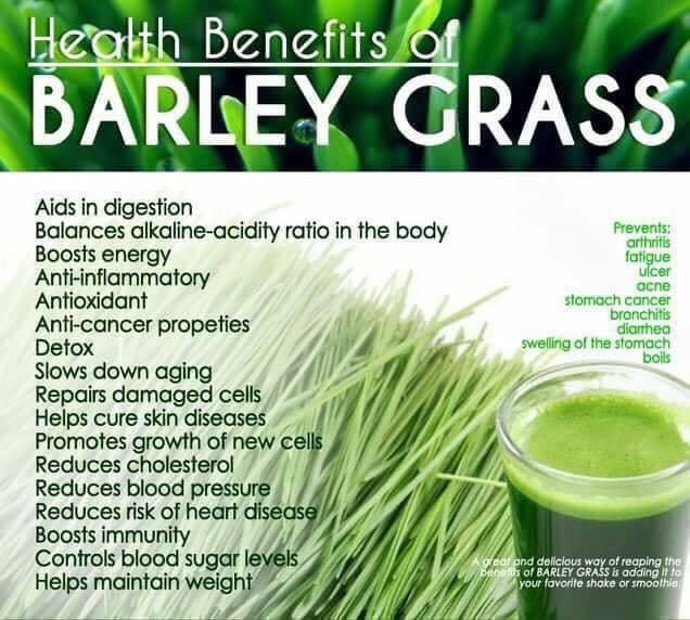 Pure Organic BARLEY Grass Powder Drink for Diabetes, High Cholesterol, Gastritis, High Blood Pressure and destroy cancer cells. Liver, kidney and gallbladder support
