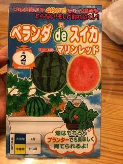 日本奈良西瓜種子