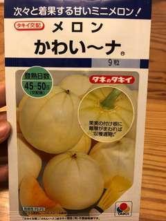 日本甜瓜種子
