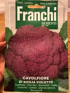 意大利紫色椰菜花種子