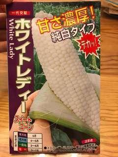 日本白粟米種子