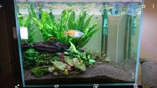 Green Chapter Gush fish tank w cabinet 60 x 45 x 45cm  + chiller, light, eheim canister filter