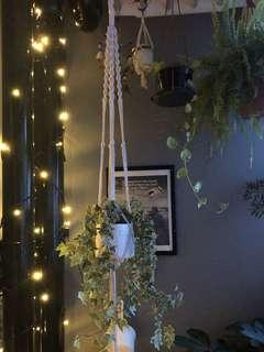English Ivy with Bohemian Macrame Planter 137cm