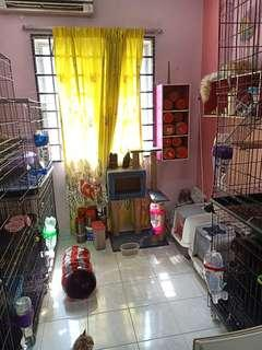 Cat Boarding with Aircond & Air Purifier