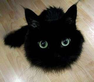 Lf for cheap cat supplies