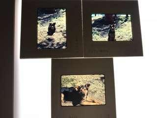 Kodak ektachrome slidea 幻燈片 70 年代 美國 狗