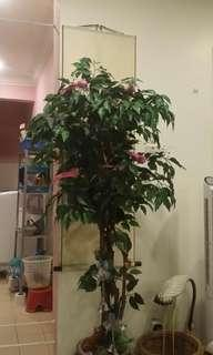 Artificial weeding fig 168cm tall with deco