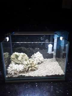 Aquarium karang laut