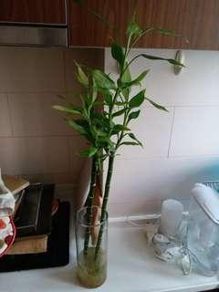 Bamboo and vase