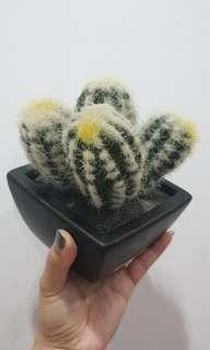 Hiasan pot kaktus