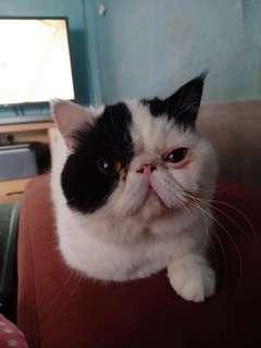 Kucing exo mantapp