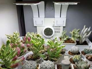 10w led grow lights (Sold out)