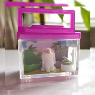 美國垂耳兔  兔子生活圖鑑飼養盒