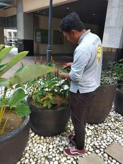 Pekerja cleaner & landscape di Desa Bina Diri Mersing Johor