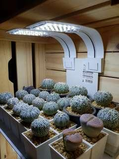 10w led grow light. (Sold out)
