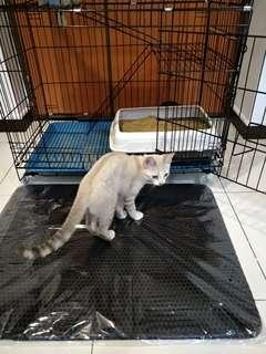 🚚 Promo!!! Cat litter mat/sand trapping