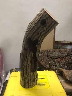 Woodpeckers wood log