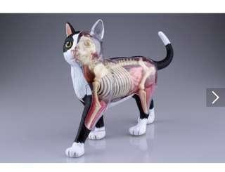 4D貓模型,日本