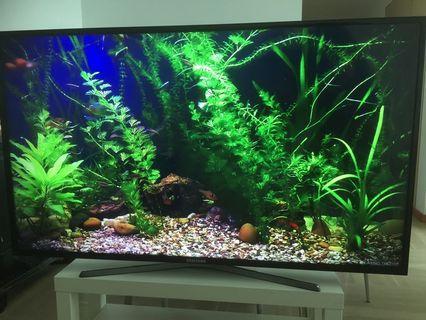"Samsung 55"" LED display/tv"