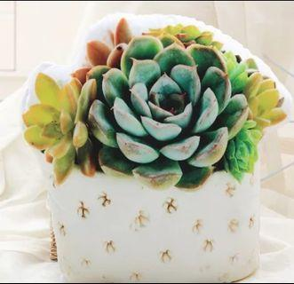 Brand new Succulent cushion with stuffed polyester filling