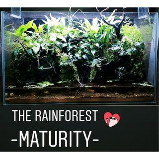 Nature First - The Rainforest (Maturity)