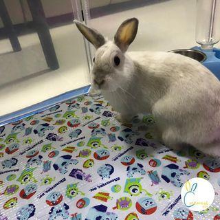 West-side Rabbit Boarding Service
