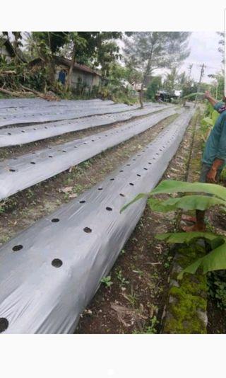 Tanah Murah Di Jual Lokasi AM Sangaji Yogyakarta