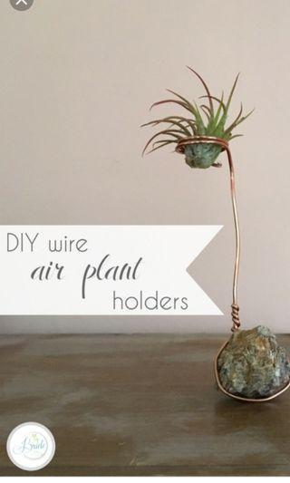 Terrarium craft wire for air plant deco