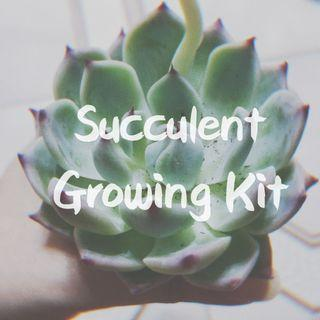 Succulent Growing Kit #MRTSerangoon