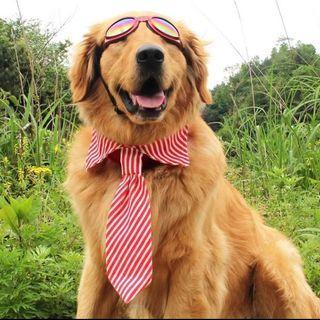 Doggy Velcro Tie