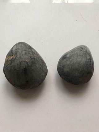 🚚 蚌石-化石-趣味擺件